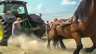 horse power log pulling !!!