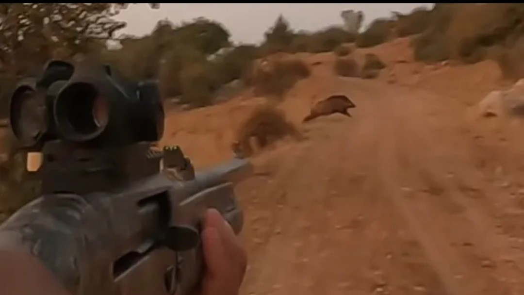 The Best Wild Boar hunt
