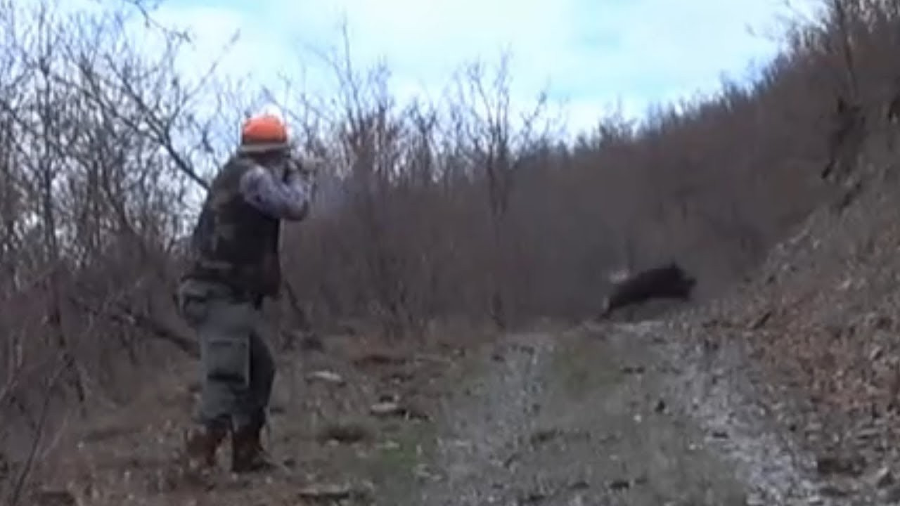 Attention!!! Pig hunting is dangerous.
