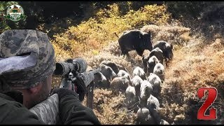 BEST WILD BOAR HUNTS 2